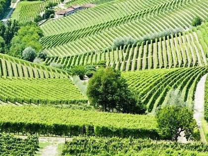 Langhe, Piemonte.
