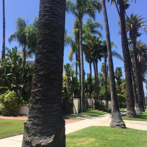 Una strada di Beverly Hills