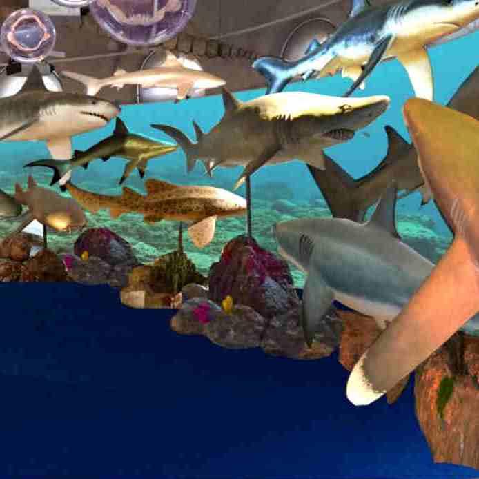 mostra sugli squali al museo kosmos di pavia